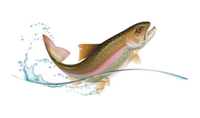 Partner - Fischzucht Mindeltal